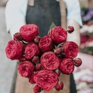 Red roses held out by Florist