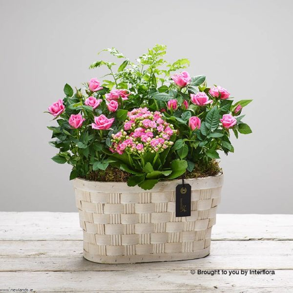 large-Mother's Day Pink Planted Bask